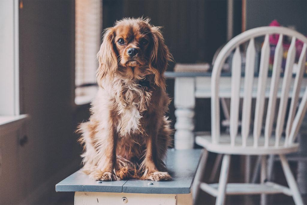 世田谷区と文京区で愛犬と一緒に受講するドッグトレーニングから、プロトレーナーによるトイレのしつけ、マナー他、ご自宅までお伺いする出張ドッグトレーニングサービス、お散歩代行、LINE無料相談、ドッグホテル、ドッグ幼稚園、短期間お預かりトレーニング、初回カウンセリングご相談後オリジナルメニューをお作りいたします。犬のしつけハグ