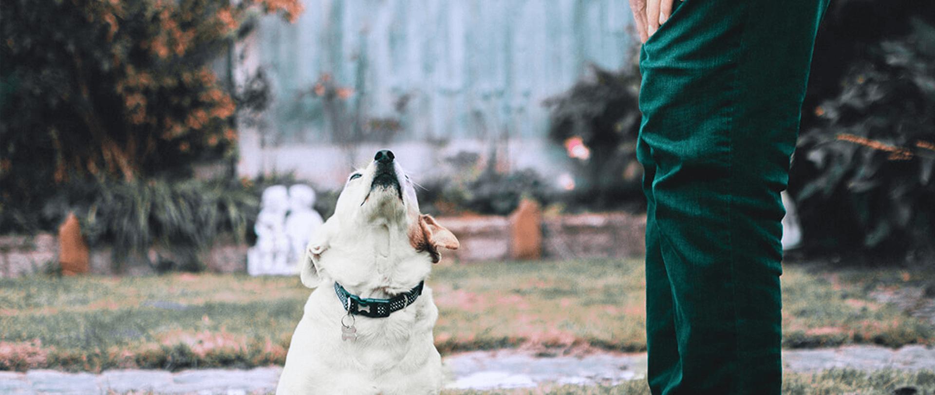 お預かりトレーニング1日の流れ,世田谷区と文京区で愛犬と一緒に受講するドッグトレーニングから、プロトレーナーによるトイレのしつけ、マナー他、ご自宅までお伺いする出張ドッグトレーニングサービス、お散歩代行、LINE無料相談、ドッグホテル、ドッグ幼稚園、短期間お預かりトレーニング、初回カウンセリングご相談後オリジナルメニューをお作りいたします。犬のしつけハグお預かりトレーニング1日の流れ,世田谷区と文京区で愛犬と一緒に受講するドッグトレーニングから、プロトレーナーによるトイレのしつけ、マナー他、ご自宅までお伺いする出張ドッグトレーニングサービス、お散歩代行、LINE無料相談、ドッグホテル、ドッグ幼稚園、短期間お預かりトレーニング、初回カウンセリングご相談後オリジナルメニューをお作りいたします。犬のしつけハグ