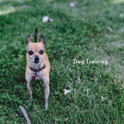 公園で、ドッグトレーニング中の犬