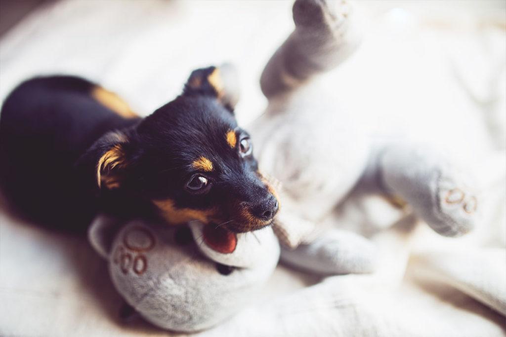 唸る、歯をむき出す攻撃行動 犬