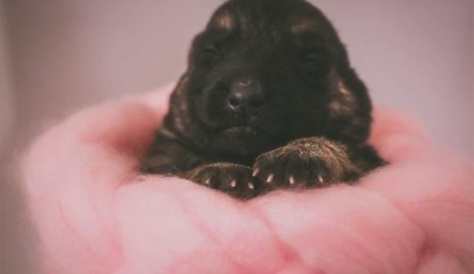 犬を迎え入れる準備をしよう!犬と暮らすためにやるべきこととは?