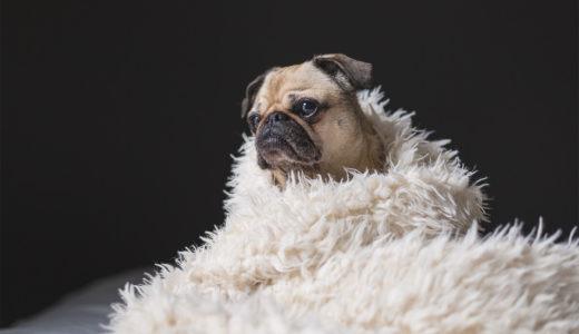 犬と暮らすための冬支度!