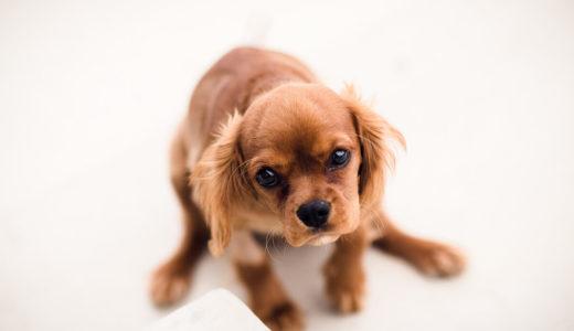 【ドックトレーナー監修】愛犬のしつけ~基本のトレーニング~トイレ1