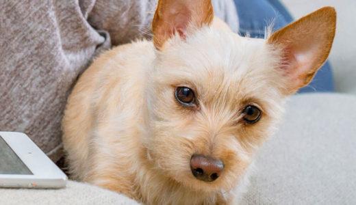 【お客様の声】K 様 ミックス犬 Mix Dog 1歳4ヵ月 オス♂
