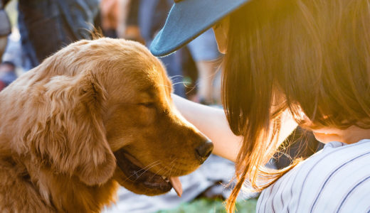 犬との信頼関係を築くための3つのコツ