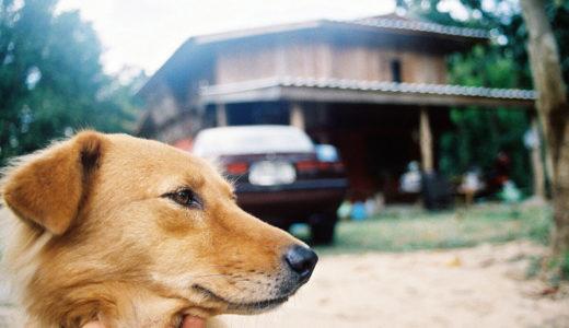 愛犬の問題行動「噛みつく」成犬になってからも、まだ間に合います