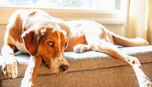 その違和感は「助けてもらいたい」愛犬の行動4つのサイン