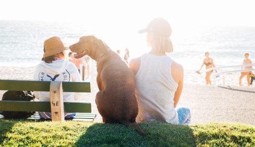 けがや病気で苦しむ人々の心と体を癒しセラピー犬とは