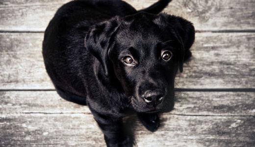 犬に絶対に与えてはいけない食べ物