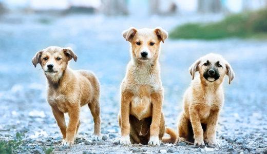 【ドックトレーナー監修】犬同士の不仲!仲良くなる方法~1