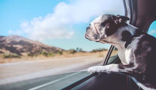 犬の車酔いの予防と対策