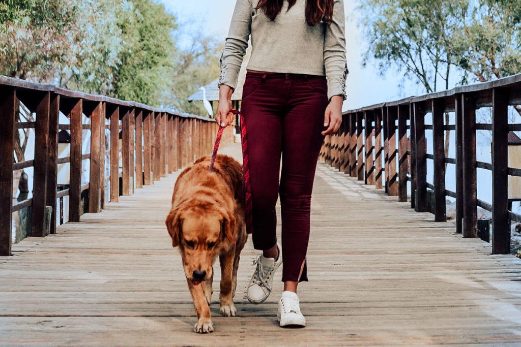 リードを引っ張ったら一旦立ち止まって!愛犬のお散歩トレーニングマナーやワクチン接種でお困りでしたら東京の世田谷区と文京区でドッグトレーニング、犬のしつけハグでご相談ください。無料LINE相談も!