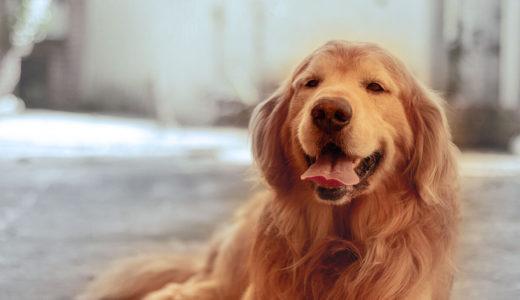 犬には不思議な能力が備わっている?ニオイで病気の兆候を嗅ぎ分ける!