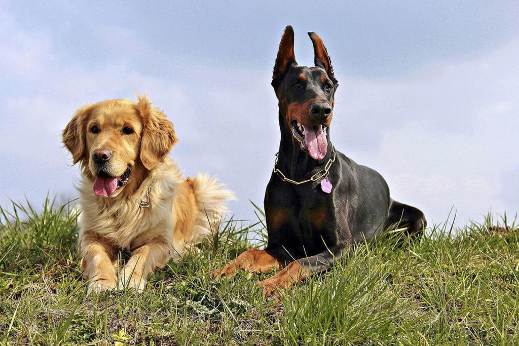 他の犬と出会った時はどうすべき?愛犬のお散歩トレーニングマナーやワクチン接種でお困りでしたら東京の世田谷区と文京区でドッグトレーニング、犬のしつけハグでご相談ください。無料LINE相談も!