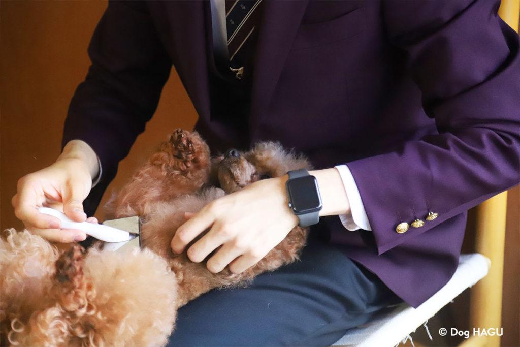 ブラッシングトレーニング、爪切りトレーニングにお悩みでしたら東京の世田谷区と文京区でドッグトレーニング、犬のしつけハグでご相談ください。無料LINE相談も!プードル