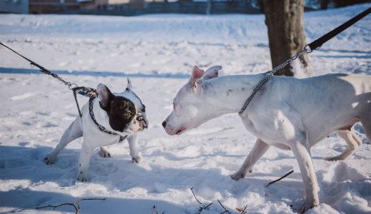 犬の寒さ対策!寒い日の散歩や室内での対策は?