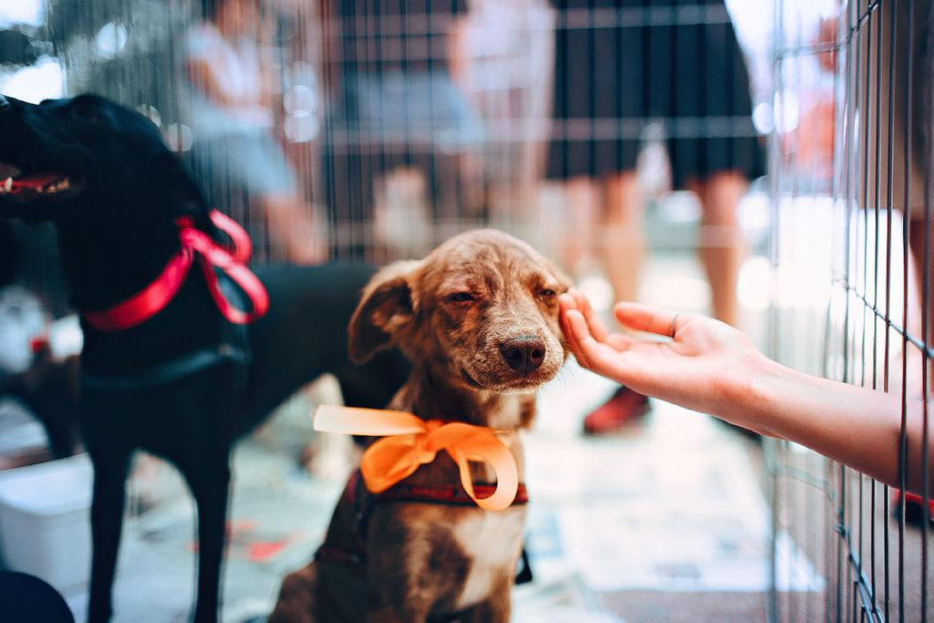ペットショップで、店員さんに勧められるがままに、はじめて犬を飼うとき