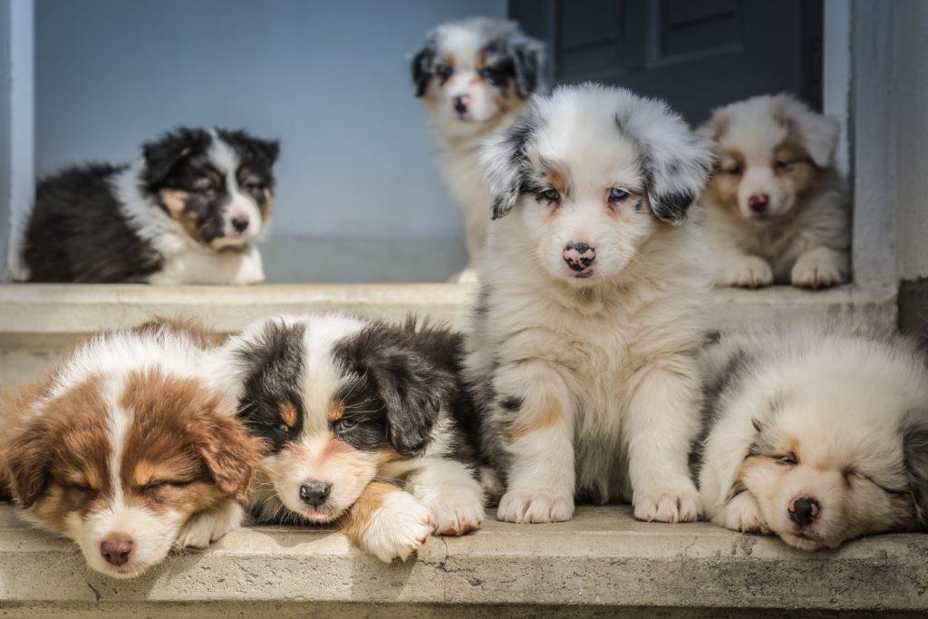 初心者、初めての犬、子犬、ドッグブリーダー購入方法についてのご相談は東京の世田谷区と文京区のプロドッグトレーナー24時間常駐の犬のしつけハグまでdogBreeder