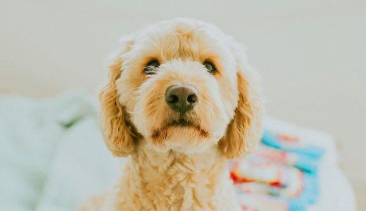 犬にリラックス効果のある音楽を探してみた!