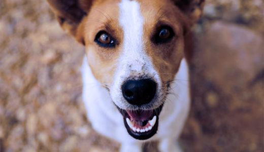 犬の鼻が渇いている?!これって病気のサイン?