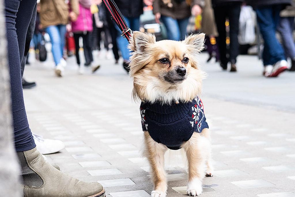 帰宅したら玄関の出入りを飼い主が先にする事!愛犬のお散歩トレーニングマナーやワクチン接種でお困りでしたら東京の世田谷区と文京区でドッグトレーニング、犬のしつけハグでご相談ください。無料LINE相談も!