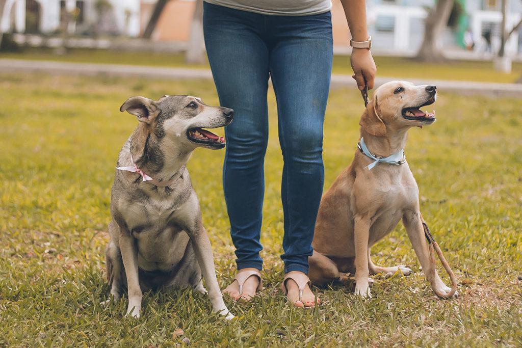 怖い思いをした、リードが嫌い、愛犬のお散歩トレーニングにお悩みでしたら東京の世田谷区と文京区でドッグトレーニング、犬のしつけハグでご相談ください。無料LINE相談も!