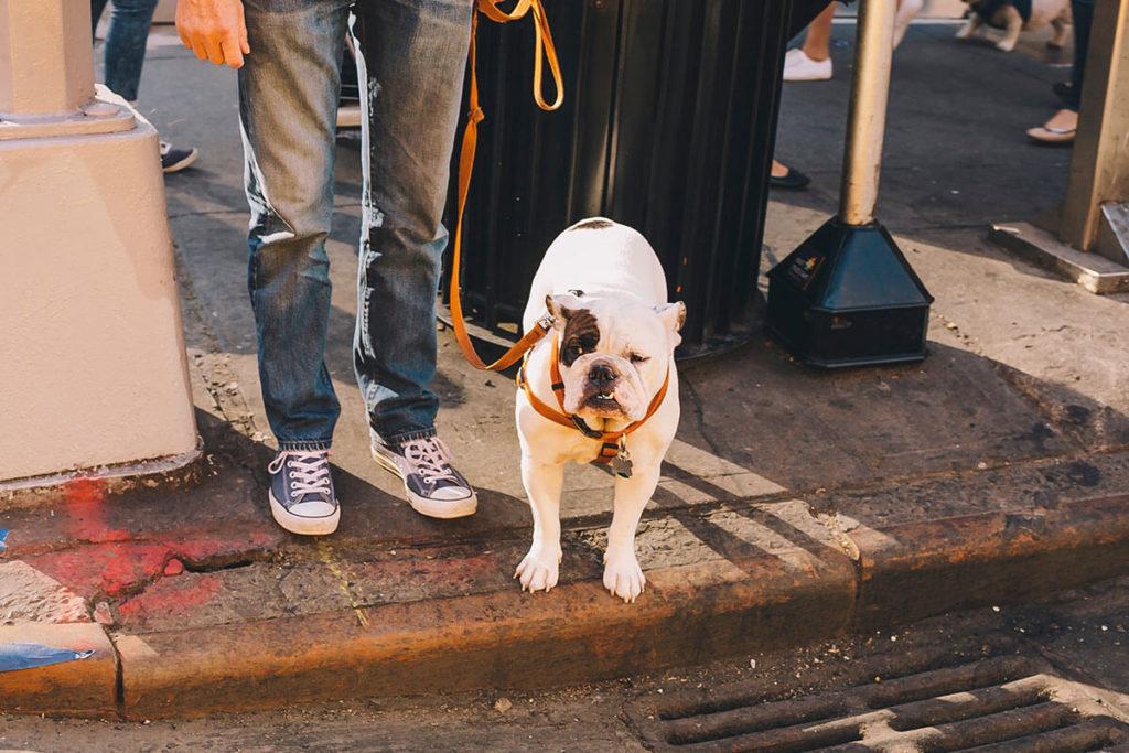 街をお散歩する男性とフレンチブルドッグ French Bulldog