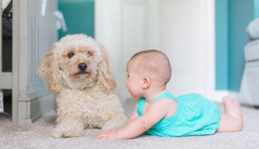 「犬は子供が嫌い」は本当?!犬が子供を苦手な理由5つ