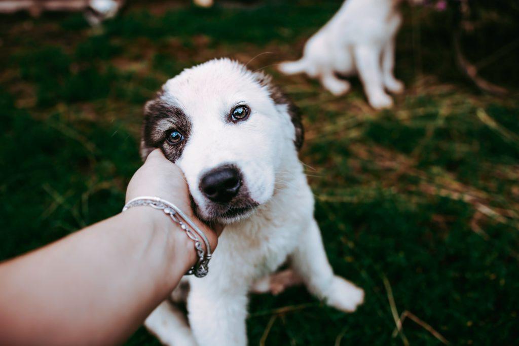 初心者、初めての犬、購入方法についてのご相談は東京の世田谷区と文京区のプロドッグトレーナー24時間常駐の犬のしつけハグまで