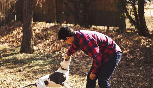 【ドックトレーナー監修】初めての犬!ルールを作る~2.噛んではいけない 3.排せつはトイレでする