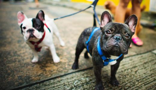 愛犬と楽しいお散歩をするためのマナーとルール