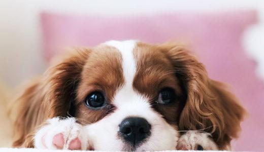 犬を飼いたい!犬の購入方法