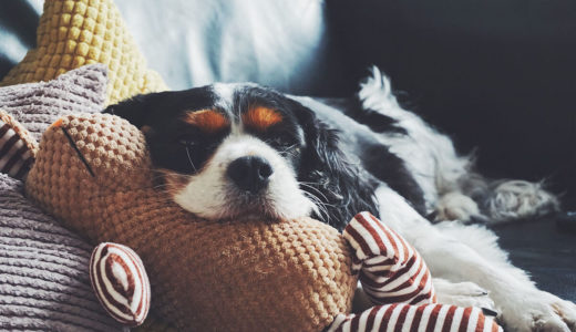 犬が風邪をひいた!飼い主がするべき事とは?