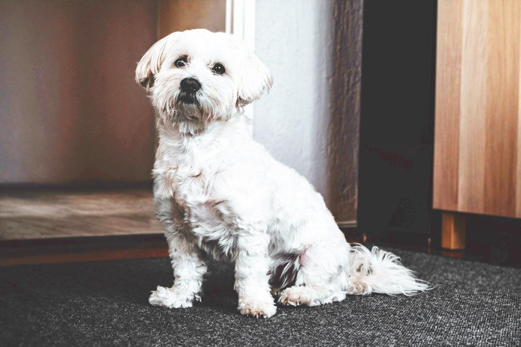 あくび、スクーティング、犬が足の上や足の間に座る、苦しそうな息の吐き方、頭をグリグリ 見かけたら注意すべき犬の行動についてのご相談は東京の世田谷区と文京区のプロドッグトレーナー24時間常駐の犬のしつけハグまで
