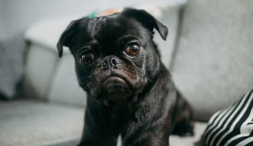 誤解・見逃しがちな犬の行動や病気の5つのサインとは?