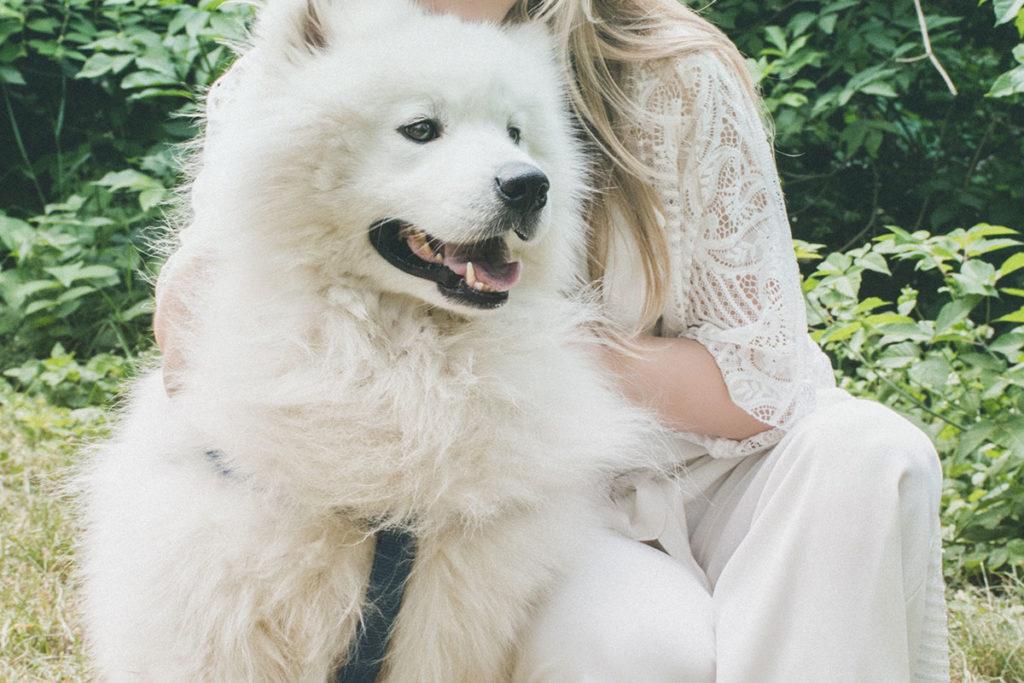 ブラッシングトレーニング、爪切りトレーニングにお悩みでしたら東京の世田谷区と文京区でドッグトレーニング、犬のしつけハグでご相談ください。無料LINE相談も!