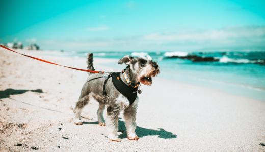 犬の散歩をするなら覚えておくべきマナーと注意点!ワクチン接種、ご飯をあげた直後の散歩はNG!