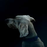 犬の息が臭い!甘噛みをする同じ場所をぐるぐる地面を掘る食糞など 見かけたら注意すべき犬の行動についてのご相談は東京の世田谷区と文京区のプロドッグトレーナー24時間常駐の犬のしつけハグまで