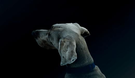 見かけたら注意すべき犬の行動5選