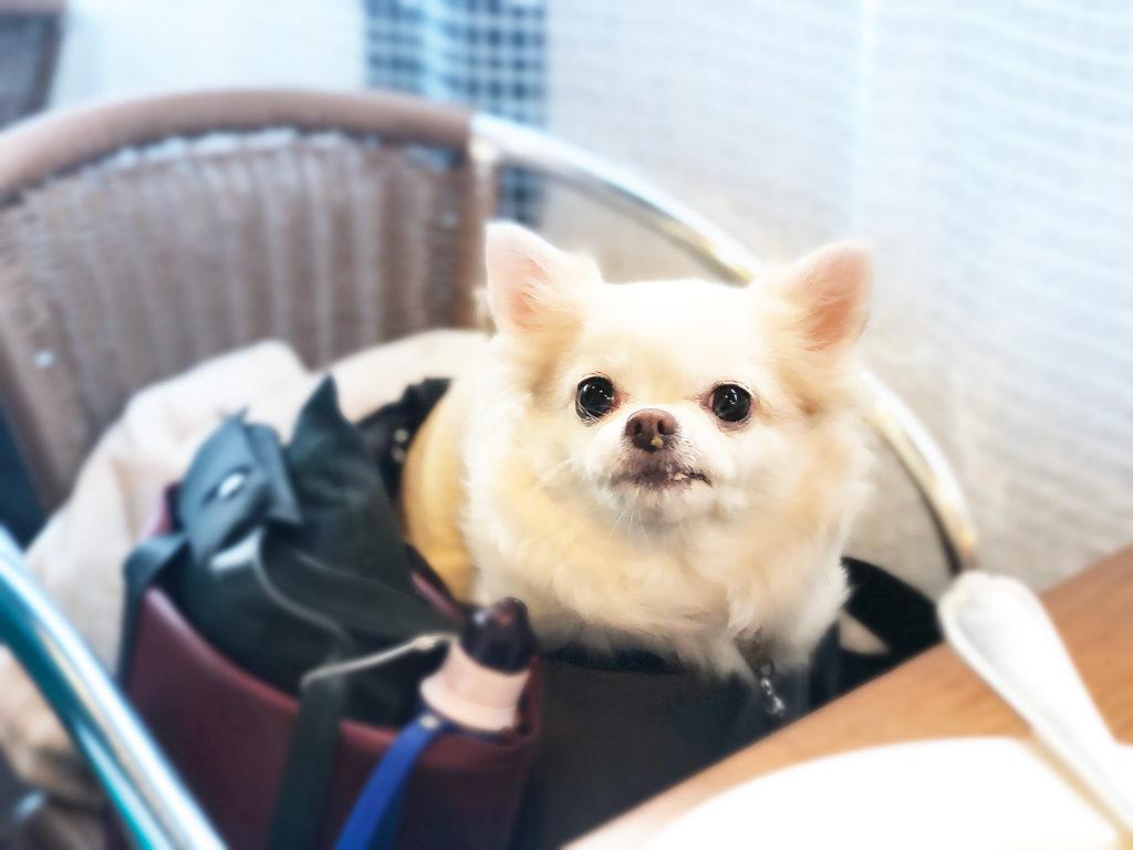 ペットと一緒に入れるカフェ トラヴェルサ東長崎店へ行きました!世田谷区と文京区で愛犬と一緒に受講するドッグトレーニングから、プロトレーナーによるトイレのしつけ、マナー他、ご自宅までお伺いする出張ドッグトレーニングサービス、お散歩代行、LINE無料相談、ドッグホテル、ドッグ幼稚園、短期間お預かりトレーニング、初回カウンセリングご相談後オリジナルメニューをお作りいたします。犬のしつけハグ