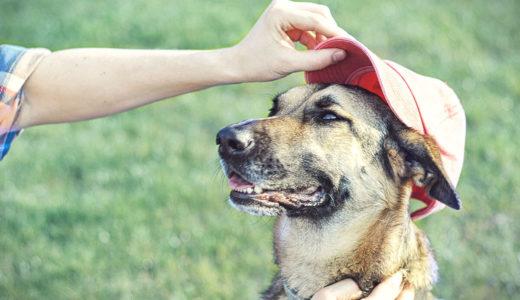 犬のボディーランゲージ・カーミングシグナルって何?