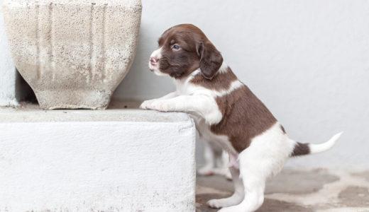 初めての犬!ペットショップでの犬選びは慎重に!受け入れる前の注意点