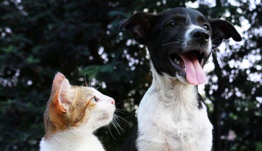 犬が舌を出しているのはなぜ?