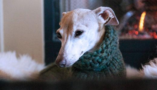 犬は寒さに強い?