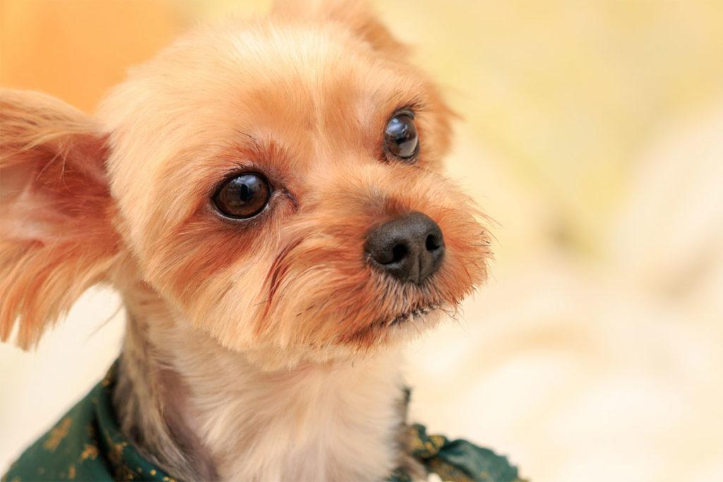 耳の掃除, 犬 世田谷区と文京区で愛犬と一緒に受講するドッグトレーニングから、プロトレーナーによるトイレのしつけ、マナー他、ご自宅までお伺いする出張ドッグトレーニングサービス、お散歩代行、LINE無料相談、ドッグホテル、ドッグ幼稚園、短期間お預かりトレーニング、初回カウンセリングご相談後オリジナルメニューをお作りいたします。犬のしつけハグ