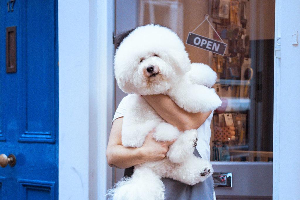 見た目の美しさ 犬のトリミングはいつから?世田谷区と文京区で愛犬と一緒に受講するドッグトレーニングから、プロトレーナーによるトイレのしつけ、マナー他、ご自宅までお伺いする出張ドッグトレーニングサービス、お散歩代行、LINE無料相談、ドッグホテル、ドッグ幼稚園、短期間お預かりトレーニング、初回カウンセリングご相談後オリジナルメニューをお作りいたします。犬のしつけハグ