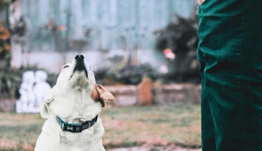 初めての犬!ルールを作る~1.吠えない