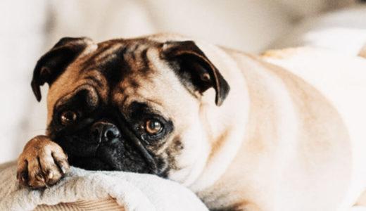 犬の肥満対策!犬の肥満は飼い主さん次第?!