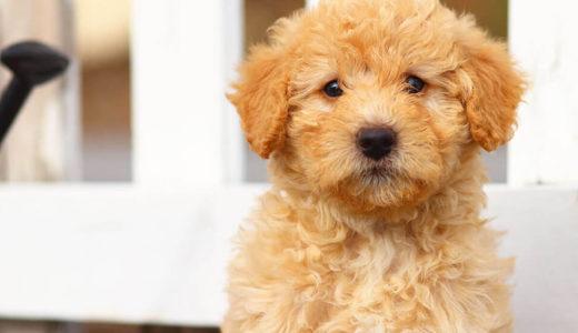 1人暮らしで犬を飼う!知っておくべき3つの条件と注意点