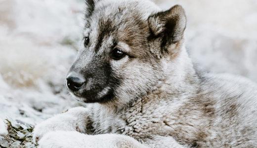犬の予防接種!時期と気を付けることは?